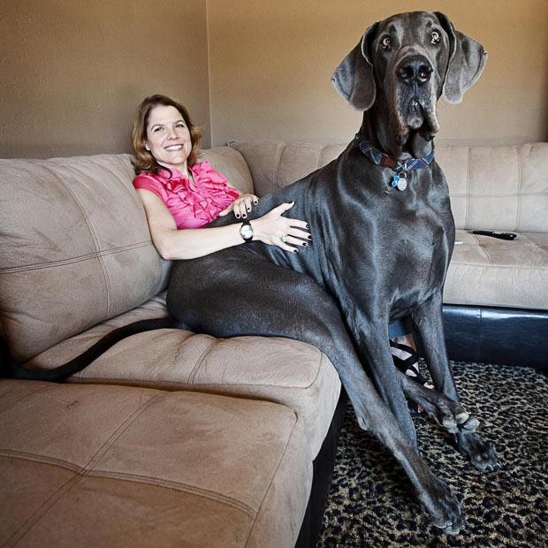 世界 で 一 番 大きい 犬