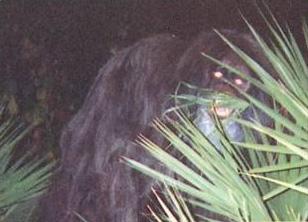 skunk-ape2