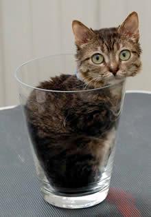 世界一小さいネコ