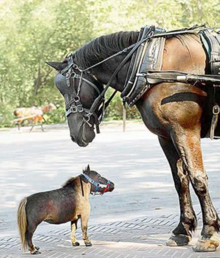 世界一小さい馬