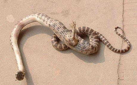 足の生えたヘビ