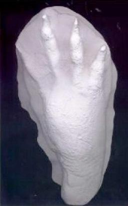 ワニの足型