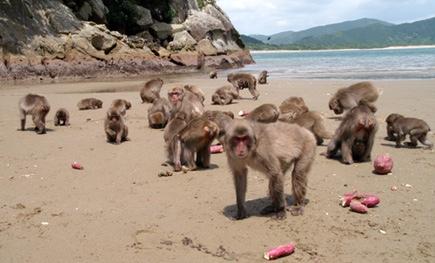 100匹目の猿