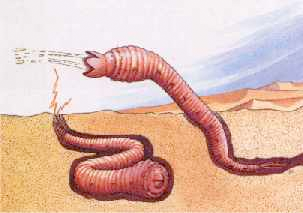 モンゴリアン・デスワームの画像