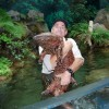 世界最大の両生類オオサンショウウオ