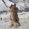 カナダで捕獲された巨大オオカミは通常の2倍の重さ