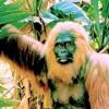 絶滅した巨大類人猿ギガントピテクス