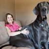 世界一大きな犬