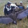 世界一大きな鳥