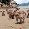 100匹目の猿現象はデタラメ