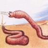 ゴビ砂漠の未確認生物「モンゴリアン・デスワーム」
